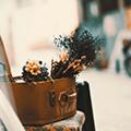تصاویر نگارخانه متن نگار , عاشقانه, گل