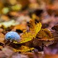 تصاویر نگارخانه متن نگار  -  پاییز , پاییز