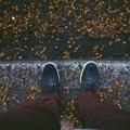 تصاویر نگارخانه متن نگار  -  پاییز , تنهایی, پاییز