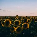 تصاویر نگارخانه متن نگار  -  گل , گل, طبیعت