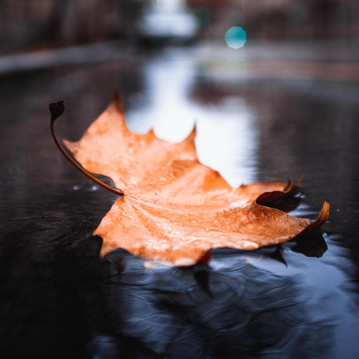 تصاویر نگارخانه متن نگار , غمگین, پاییز, تنهایی
