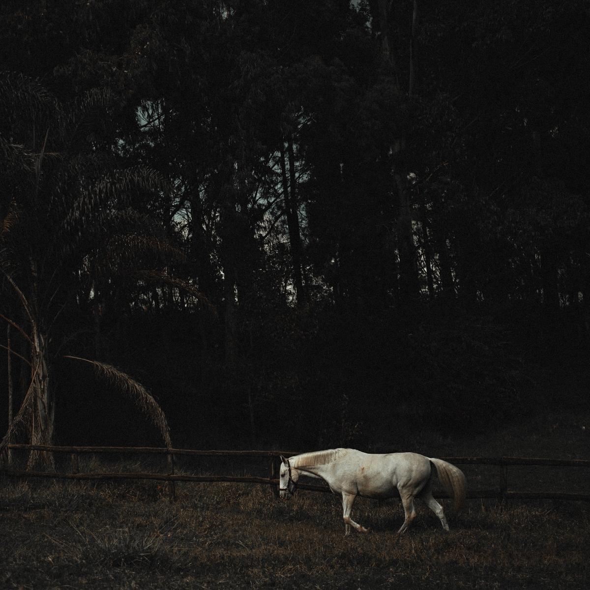 تصاویر نگارخانه متن نگار , تنهایی, طبیعت