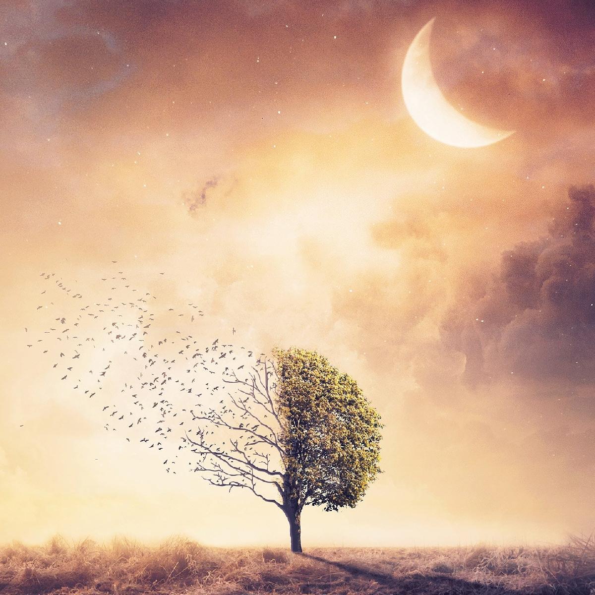 تصاویر نگارخانه متن نگار , غمگین, تنهایی, طبیعت