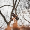 تصاویر نگارخانه متن نگار  -  طبیعت , زندگی, طبیعت