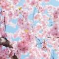 تصاویر نگارخانه متن نگار  -  گل , گل, نوروز