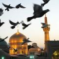 نگارخانه متننگار 312KB  امام رضا (ع)