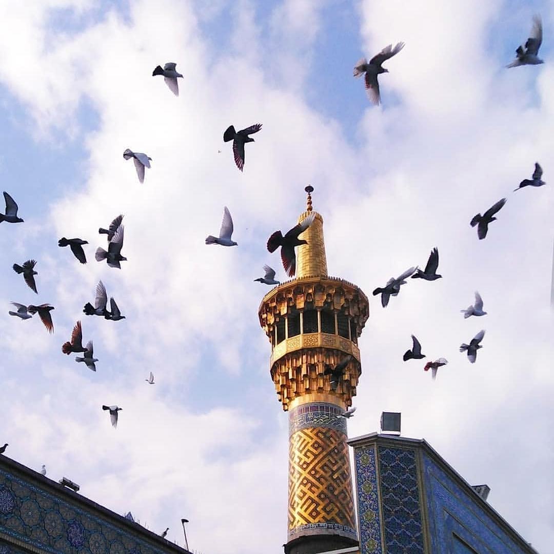نگارخانه متننگار   امام رضا (ع)