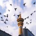 نگارخانه متن نگار 444KB  امام رضا (ع)