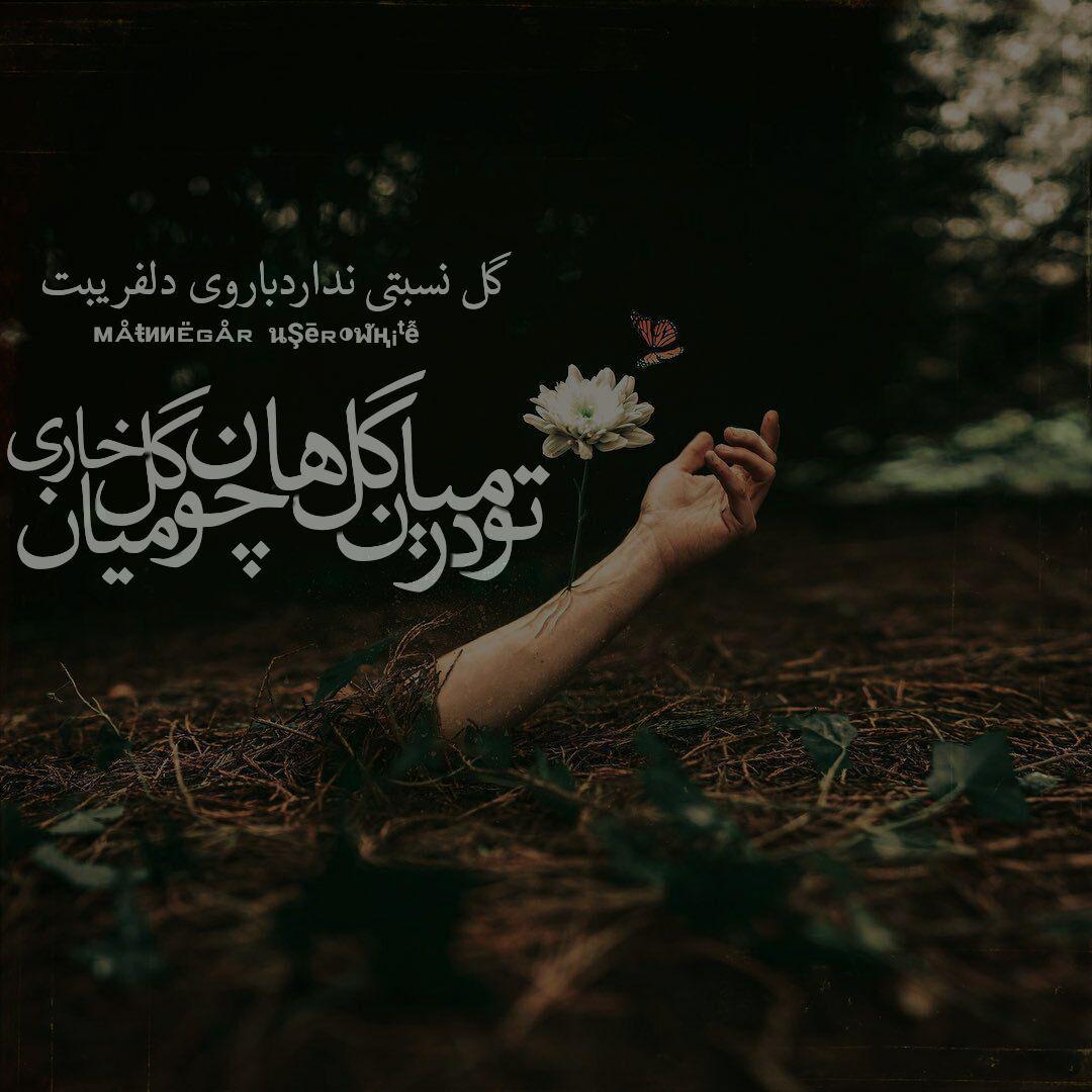 متن نگار - گل نسبتی ندارد با روی دلفریبت   تو در میان گل ها چون گل میان خاری...