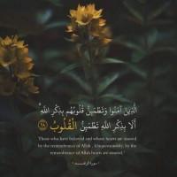 برترینها متننگار Amin3zar