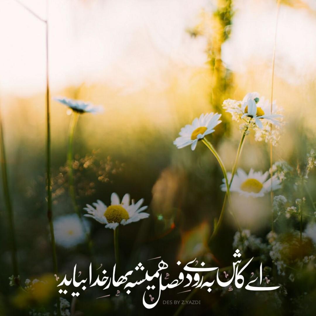یزدی - ای کاش به زودی فصل همیشه بهار خدابیاید...
