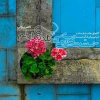 تصاویر نگارخانه متن نگار , #ناصرپروانی  گلهای خانه تشنه اند حرفی ولی از آب نیست حسّت بهار میکند گلدان تبدار دلم
