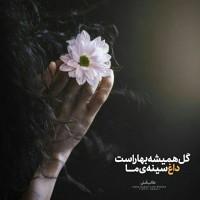 طراح: کیمیا نبوی, گل همیشه بهار است داغ سینهی ما  #طالب_آملی