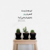 طراح: هاشم شهرزاد, این چه رازیست كه هر بار بهار با عزای دل ما می آید؟  #هوشنگ