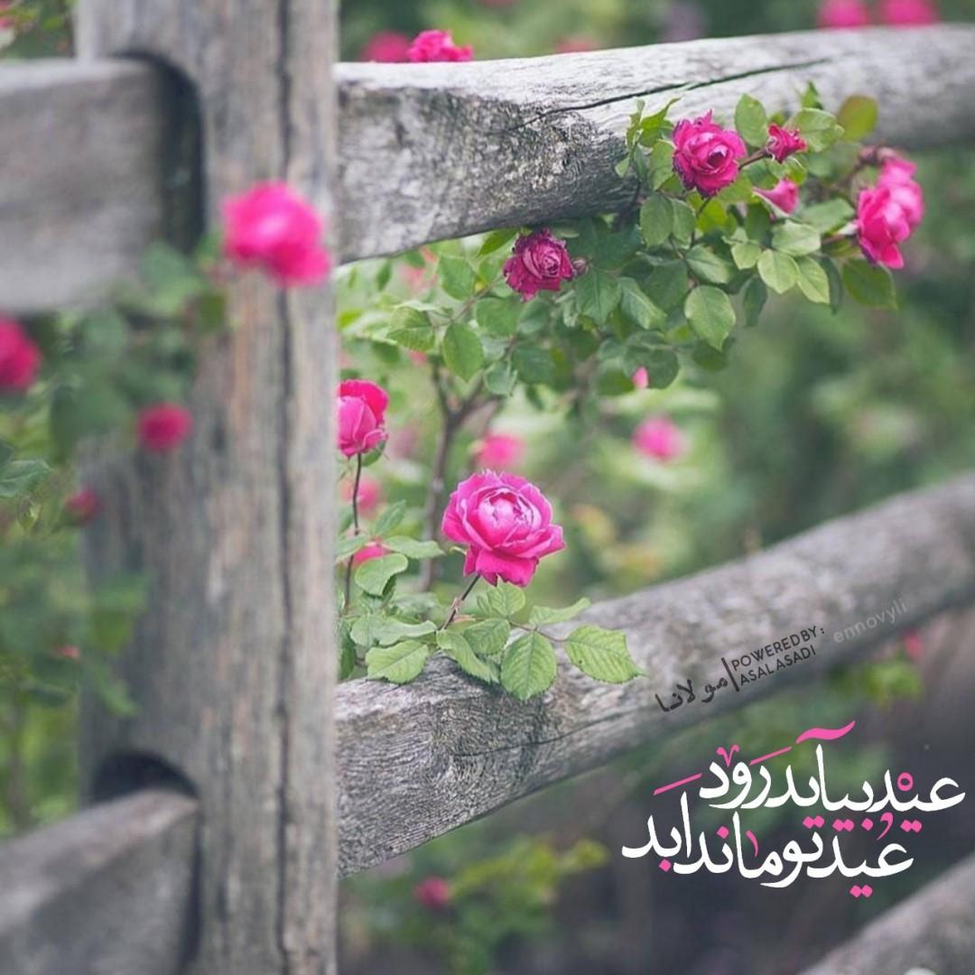 عسل اسعدی - عید بیاید روَد عید تو ماند ابد  #مولانا