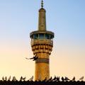 نگارخانه متن نگار 1.46MB  امام رضا (ع)