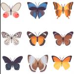 برچسب پروانه