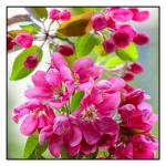 پسزمینه گل