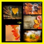 بکگراندهای پاییزی2