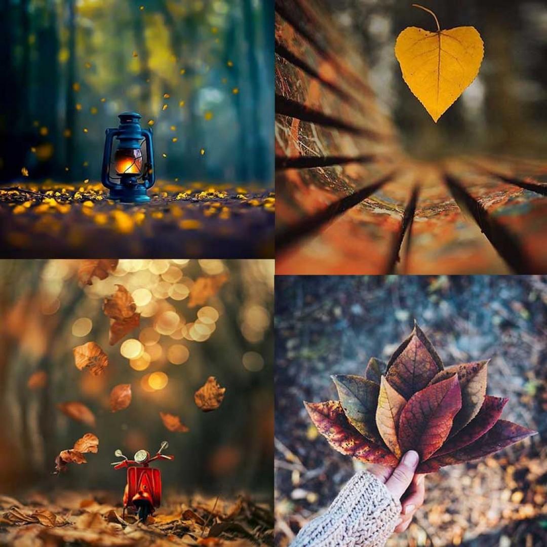 مجموعه تصاویر طبیعت