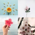 مجموعه تصاویر گل