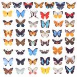 مجموعه برچسب پروانه