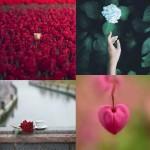 مجموعه تصاویر گل 2